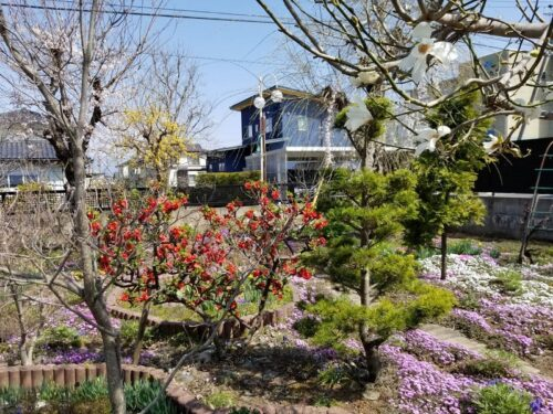 スタッフブログ「お打合せは素敵なお庭を眺めながら・・・」