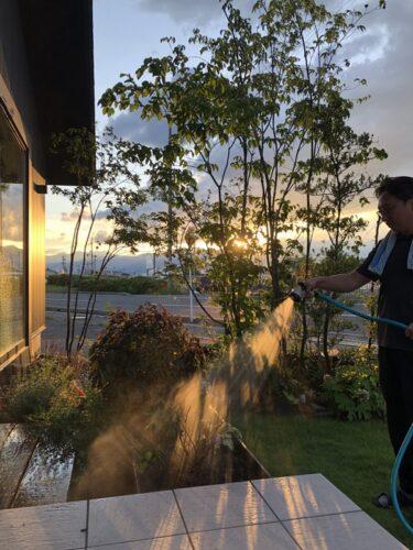【ブログ】真夏、夕方の水まき