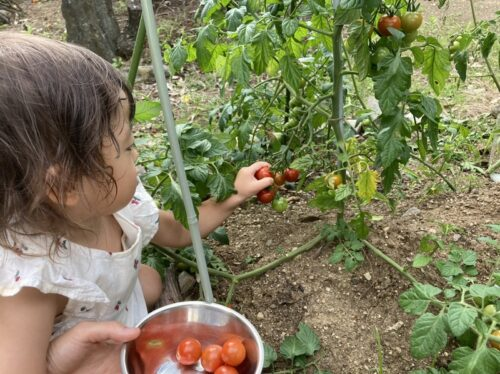 【ブログ】我が家の「庭育」 ~梅雨明け、いざ収穫!編~