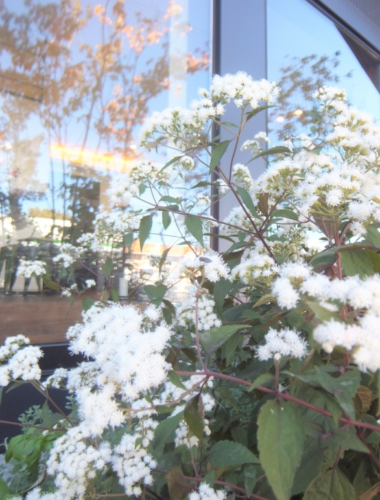 【ブログ】秋の花と蝶々